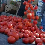 Цената на едро на доматите скача с близо 15%