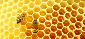 40-60% спад на медопроизводството за 2020 г.