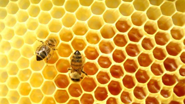 Фестивал на меда ще се проведе в Поморие
