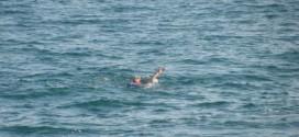 Морето взе нова жертва