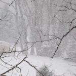Германия, Швейцария и Австрия се готвят за наводнения и обилни снеговалежи