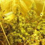 Рекордно количество от 40 кг канабис бе намерено в дома на помориец