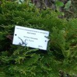 Българи и чужденци засадиха по едно дърво в Ахелой