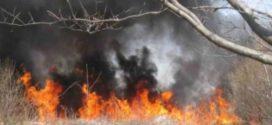 Бедствено положение е обявено в 4 общини, заради пожари