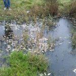 Повторна проверка установи мъртва риба във водоем край Поморие