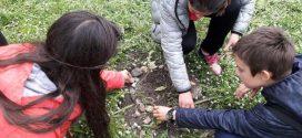 """140 дръвчета засадиха ученици  в чест на 140-годишния юбилей на СУ """"Иван Вазов""""-Поморие"""