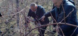 Зарязаха лозята край Каблешково
