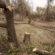 Засаждат нова растителност на крайбрежната алея в кв. Сарафово