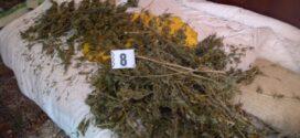 4,5 кг канабис е открит в дома на 60-годишен от сунгурларско село