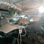 Полицията разби нарко-оранжерия в с. Ясна поляна