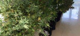 Близо 10 кг марихуана е открита и иззета от частен дом в Поморие
