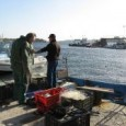 Рибари в Приморско и Китен се стягат за протести от понеделник. Това съобщи Петко Димитров от местното рибарското сдружение. Рибарите са силно притеснени от намерението на варненска фирма да изгради...