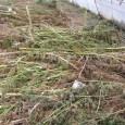 В резултат на полицейските действия, предприети от служителите на Териториално звено «Борба с организираната престъпност» – Бургас са установени и унищожени три оранжерии, разположени в близост до с. Просеник, общ....