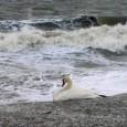 Бедственото положение в Поморие и това, което се случи днес на рибраския хелинг. Благодарим за предоставените снимки на художниците Георги Димитров и Георги Карталов!