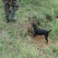 На 1-ви януари 2013 г., който е обявен за почивен ден, ловците ще могат да упражнят своето хоби съгласно разрешените в Закона за лова, видове дивеч. Днешният 31-ви декември 2012...
