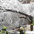 """Дървета падат като солети в Смолян и региона заради тежкия сняг. Дърво се изкорени и падна на централния булевард """"България"""" срещу входа на """"Билла"""". Като по чудо в това време..."""