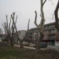 Жители от кв. Св. Георги питат за следното: Какво налага масовото изсичане – окастряне до дъно – на млади дървета, които нямат нужда от оформяне на короната и не пречат...